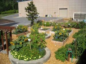 raised-beds-soils-matter