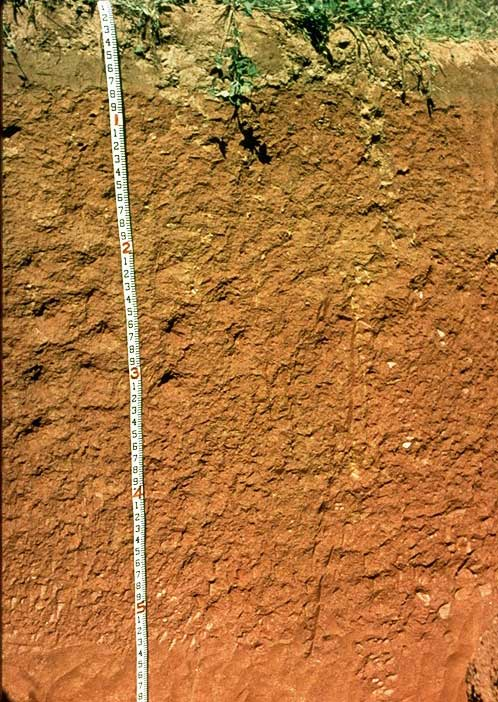 The shades of soil soils matter get the scoop for South carolina soil