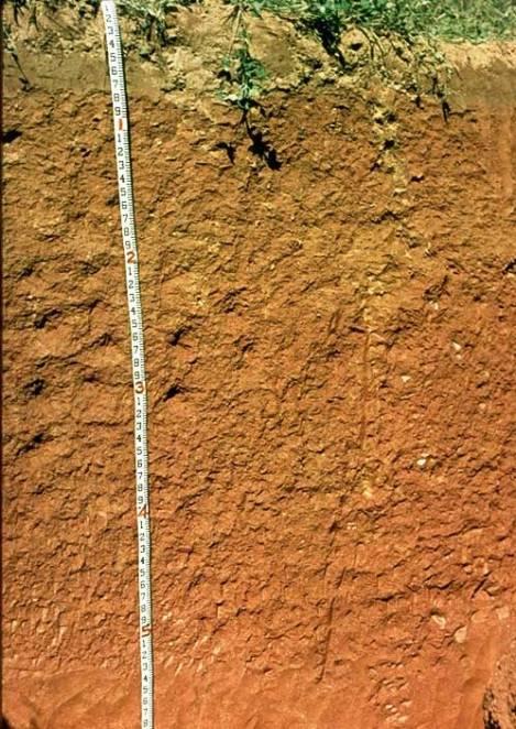 soil-with-hematite