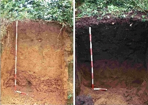 favorite-soil-fig-1