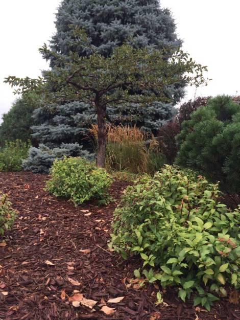 mulched-yard
