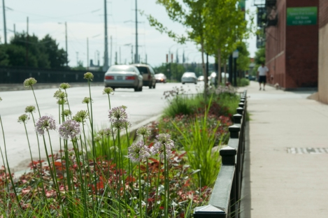 "The ""Greenest Street in America"" is located near Benito Juarez Community Academy, Chicago. The project is an unprecedented demonstration of cutting-edge sustainable design. The sidewalks, bike lanes, and part of the roadway were reconstructed using permeable pavement. The streetscape includes vegetated planters (shown), bioswales, rain gardens and below-ground infiltration basins. In simulated results, the sustainable streetscape project could capture 80% of the rainfall for a Chicago storm of ¾"" in five hours. Credit: Dan Wendt, Chicago MWRD."