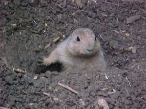 Gophers and other large animals rely on soil for protection.