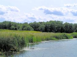 Wetlands are found everywhere. However, wetlands encompass less than 1% of the world's surface.