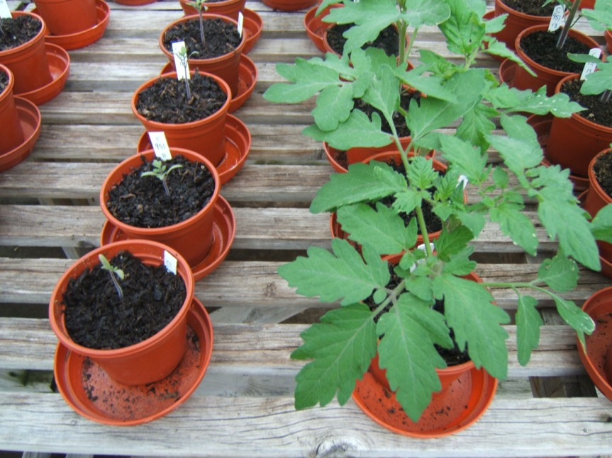 """Is """"potting soil"""" the same as the soil in my yard? Are both equally okay to useindoors?"""