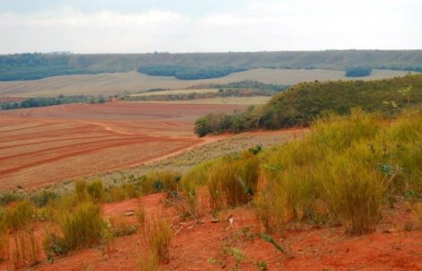 Agricultural use of the Brazilian cerrado with very red soils visible. Source: http://curitibainenglish.com.br/wp-content/uploads/2015/05/127110.jpg
