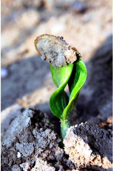 Soil is a provider of life, giving nutrients and structure to hold up plants. Soil testing helps you know how healthy your soil is – and how abundant your crop yield may be. Credit: Asim Biswas