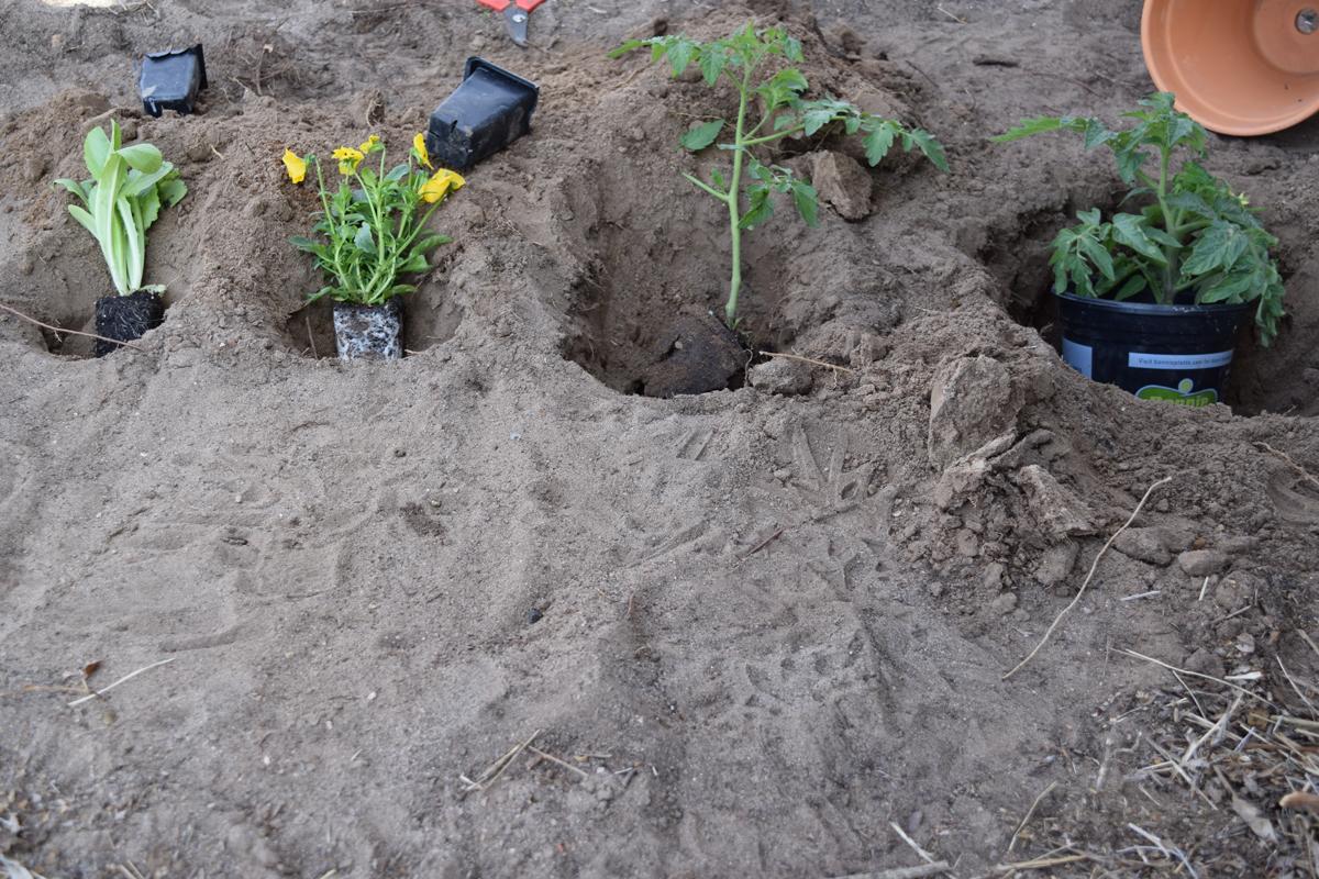Digging PotsHolesSizes01x1200