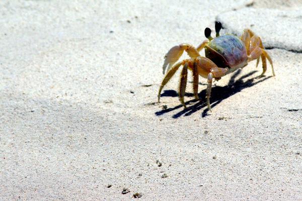 Beach Sand: It's reallysoil?