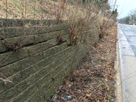 Retaining wall with plant growth coming through bricks