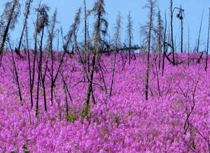 Alaska Soils Mark Clark 3 cropped x 300