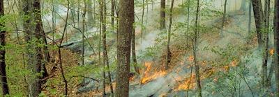 Prescribed burn in forest