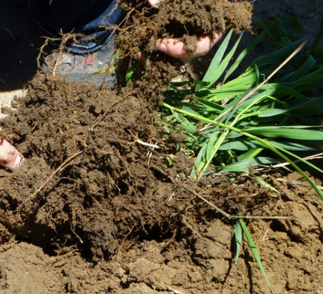 Photo of roots and soil