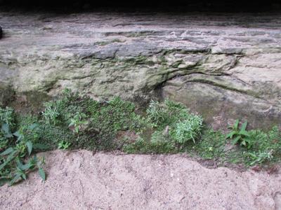 Rocks, plants and sand