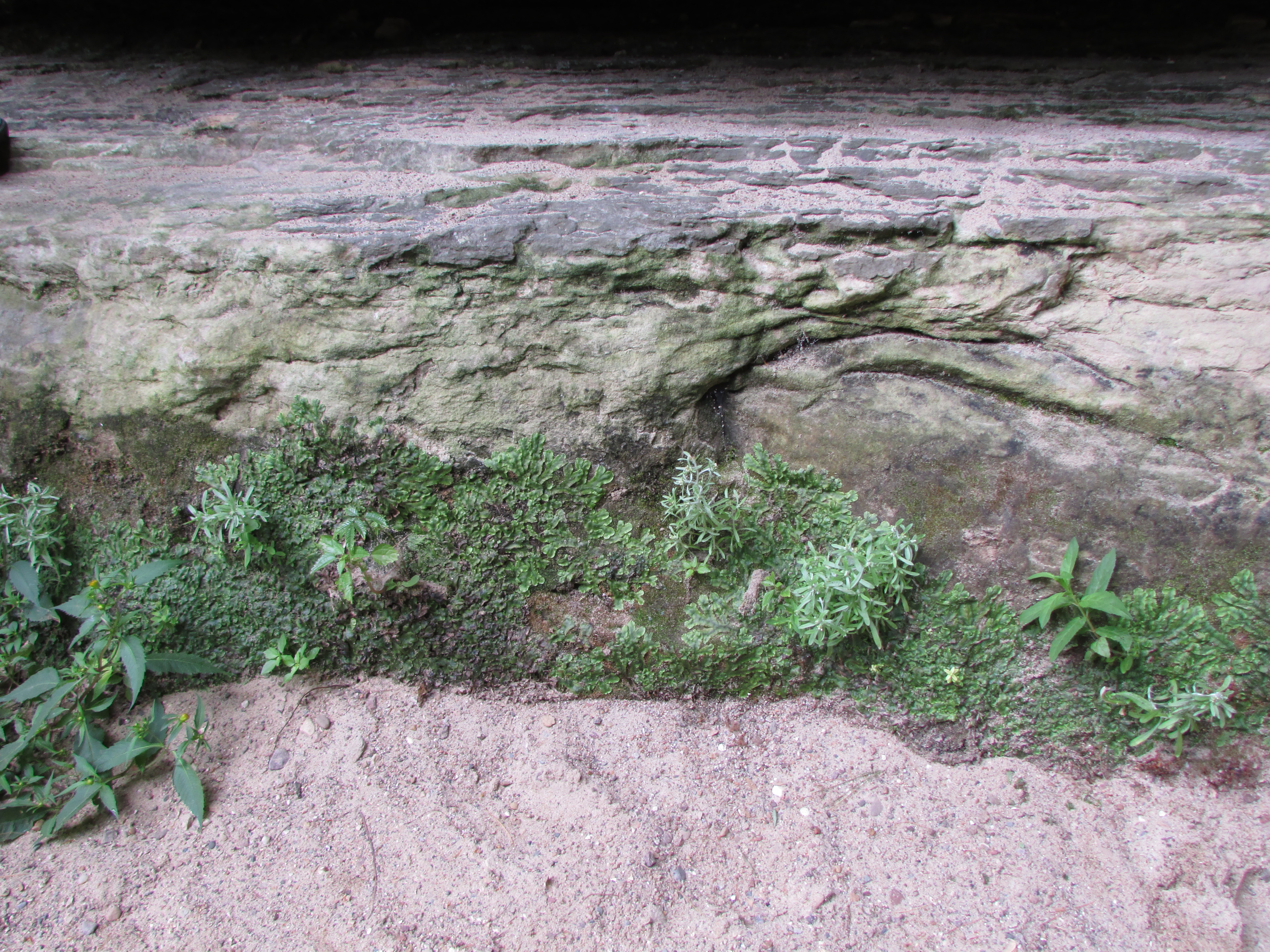 When does rock become soil? | Soils Matter, Get the Scoop!