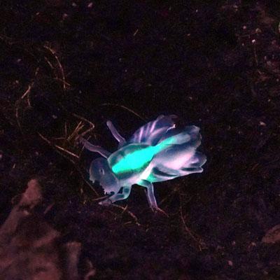 Fake glow in the dark bug in soil