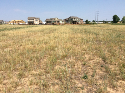 native grasses, houses in background