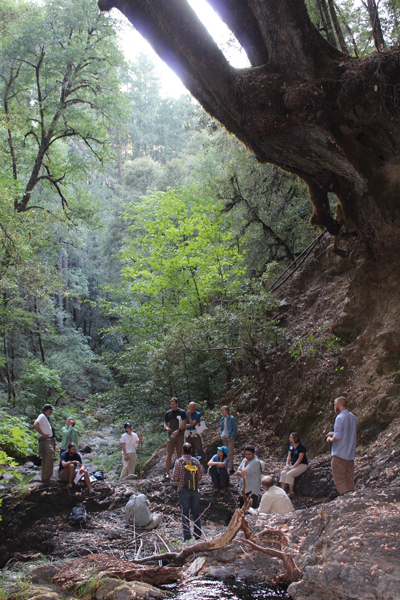Scientists in a forest at Eel River, CA