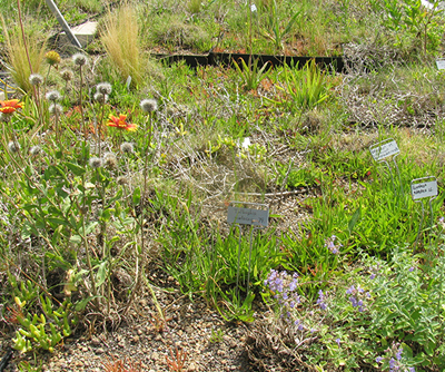 Variety of plants on a green roof