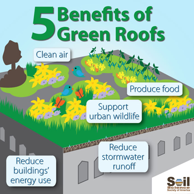 5 benefits of green roofs infographic