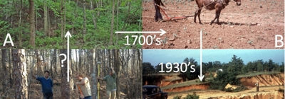 Graphic showing original forest, agricultural use, erosion, and reforestation