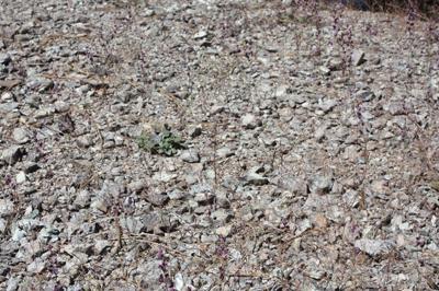 greyish rocks and soils