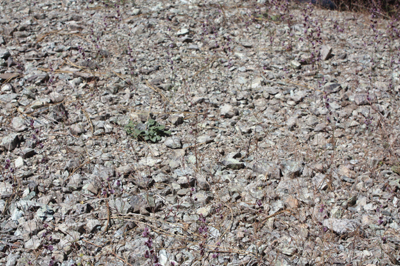 greyish rocks and soils