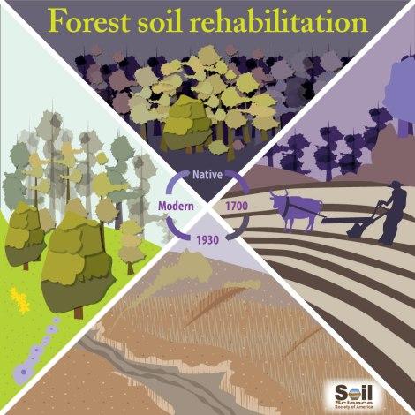 diagram of forest soil rehabilitation