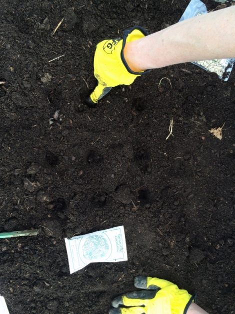 Yellow gloved hands poking holes to plant seeds in soil
