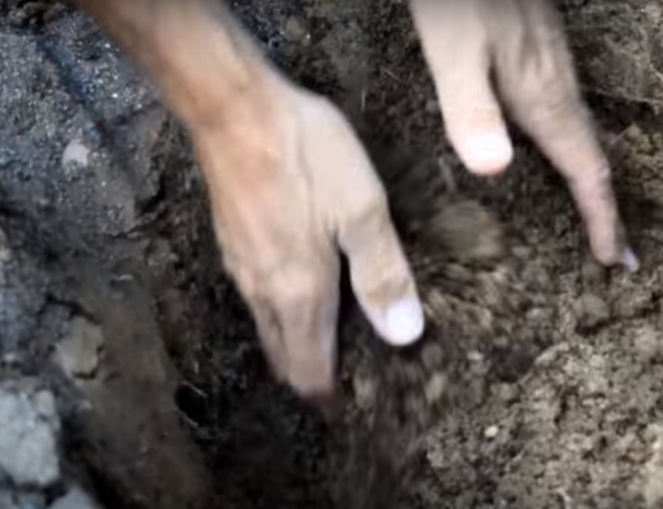 Hands mixing dark colored compost with soil in a garden hole.