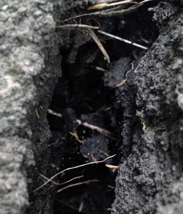 dark soil with lighter roots showing in a gap