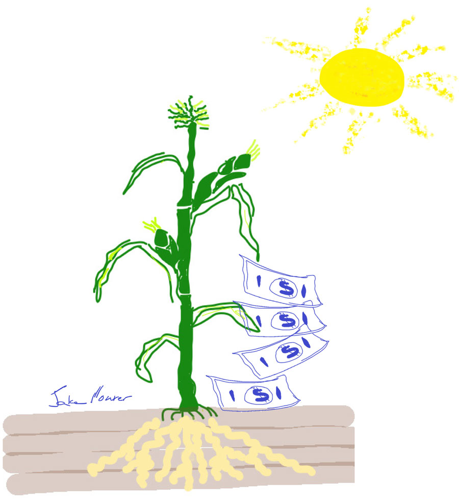 drawing of yellow sun, green corn plant with roots and fake money dropping from the corn