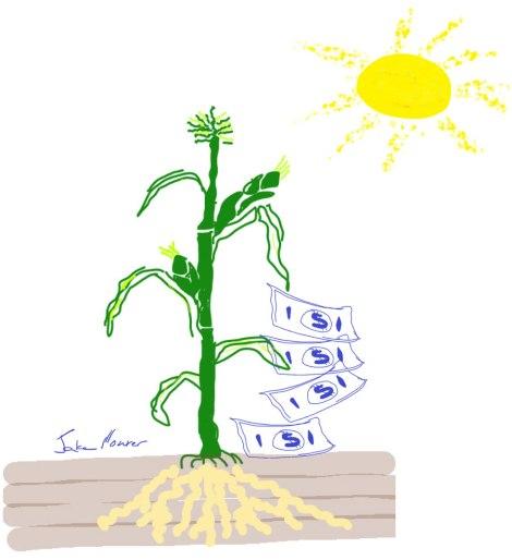 Dibujo de sol amarillo, planta de maíz verde con raíces y dinero falso que cae del maíz.