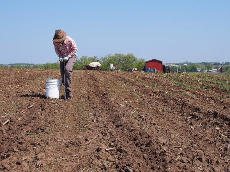 Woman with hat digging in farm field soil - red barn in background