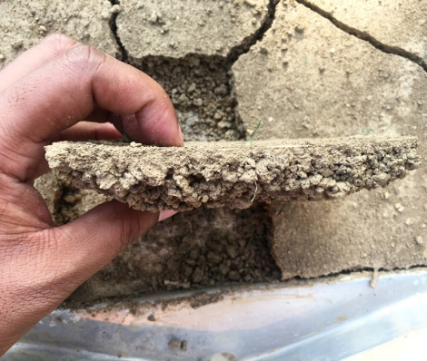 Hand holding half to one-inch thick section of hard soil