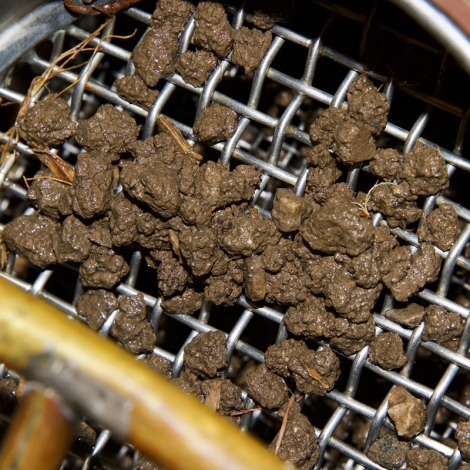 wire mesh sieve that has small brown clumps of soil