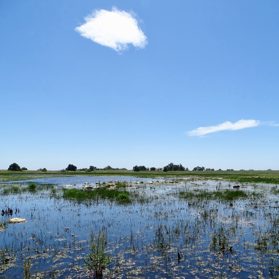 Very blue sky with few clouds, a line of grass and trees, then marshy, watery area with some grasses in foreground reflecting the blue of the sky