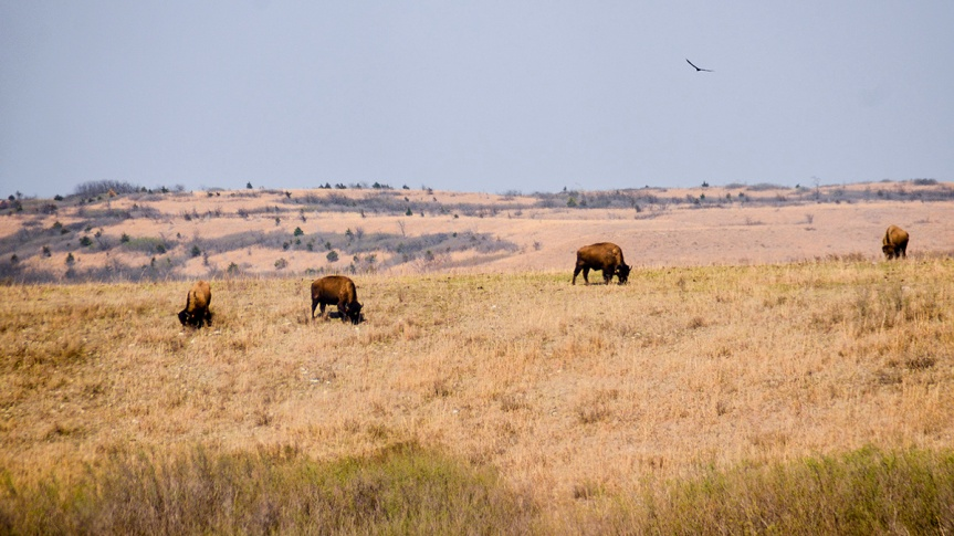 Great American Prairies – the most endangered ecosystem on earth?