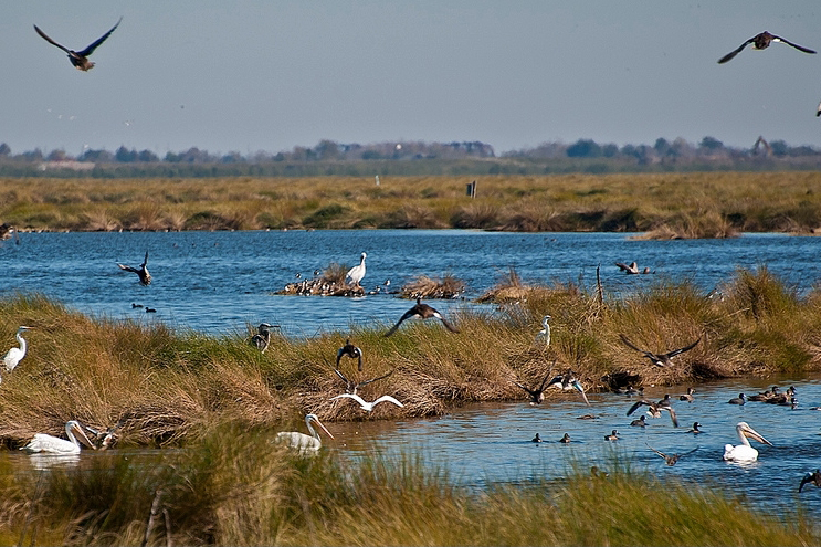 birds flying over water and wetland