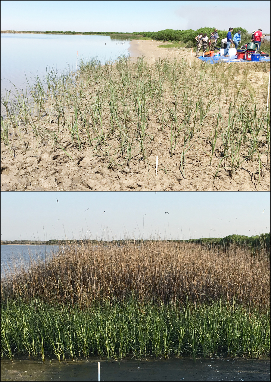 top photo mostly sand with little plants, bottom photo crowded wetland plants