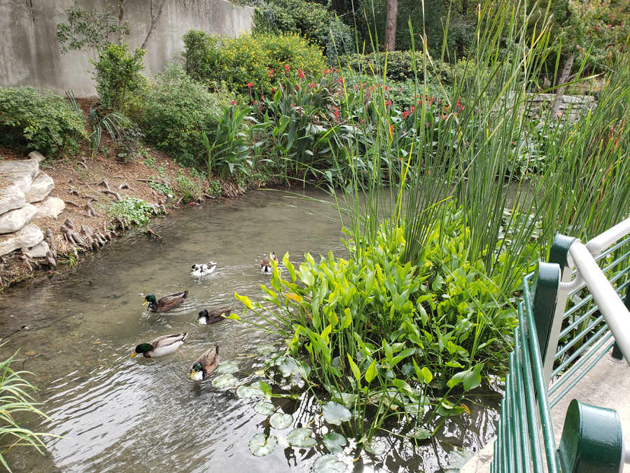 ducks swimming in stream