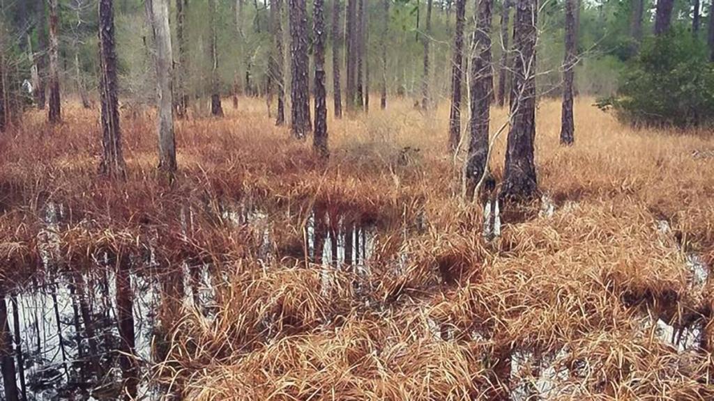 Flooded marsh in forest setting