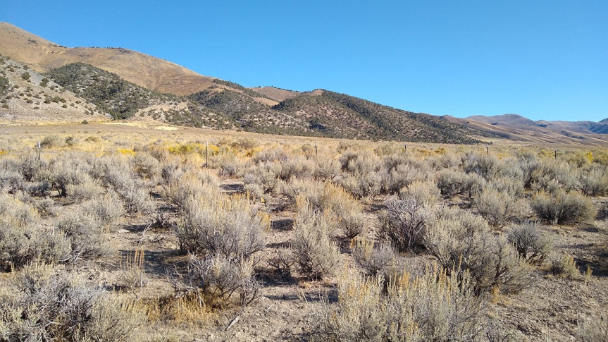 What is the impact of fire on desert soils of Nevada?