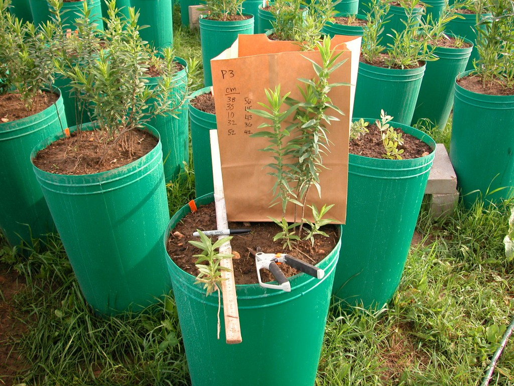 potted plants in buckets with tools and measurements written on paper bag